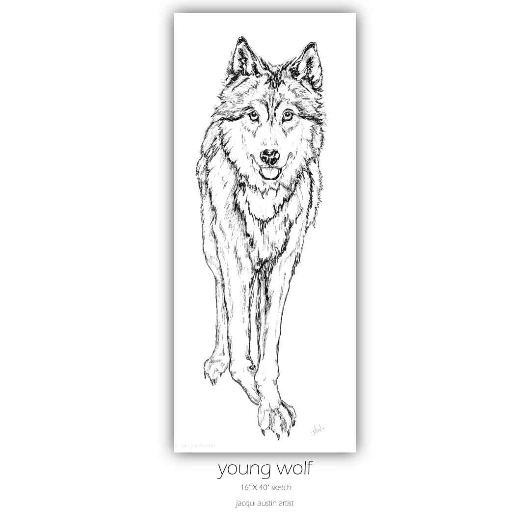 young wolf sketch