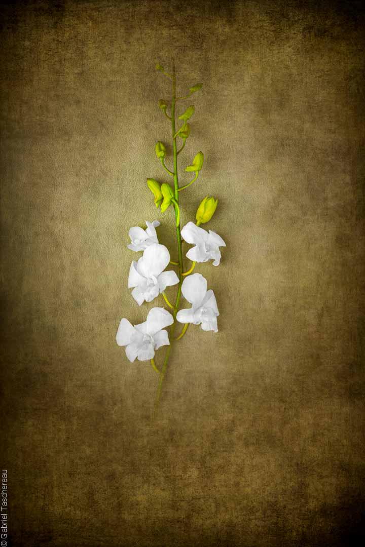 flower solo
